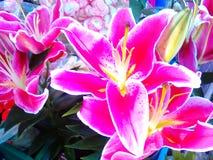 Casa dei fiori Fotografia Stock