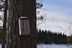 Casa del bombo su un gambo del pino Fotografie Stock