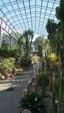 Casa del cactus a Aberdeen soleggiato Immagini Stock
