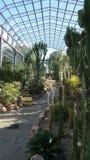 Casa del cactus en Aberdeen soleada Imagenes de archivo