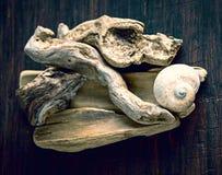 Casa del caracol y pedazos de madera secos Fotos de archivo libres de regalías