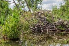 Casa del castoro sulla riva del lago Fotografia Stock Libera da Diritti