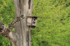 Casa del estornino para los pájaros Imagen de archivo libre de regalías
