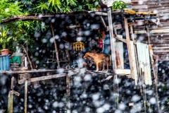 Casa del fiume a Bangkok Fotografie Stock