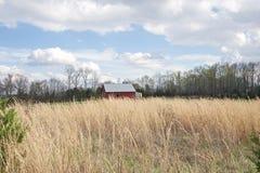 Casa del granero en un campo de la alta hierba del trigo Imágenes de archivo libres de regalías