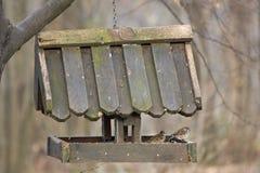 Casa del pájaro con la consumición de los pájaros Imagen de archivo