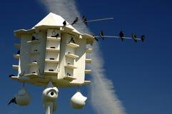 Casa del pájaro de Martin púrpura Imagenes de archivo