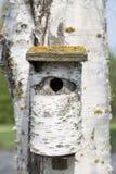 Casa del pájaro del árbol de abedul en abedul Foto de archivo libre de regalías