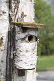 Casa del pájaro del árbol de abedul en abedul Imagen de archivo