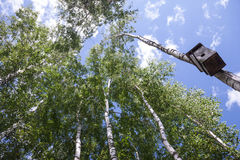Casa del pájaro en árbol de abedul Imagenes de archivo