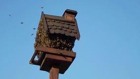Casa del pájaro ocupada por la colmena de la abeja almacen de video