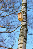 Casa del pájaro que cuelga en un abedul. Imagen de archivo libre de regalías