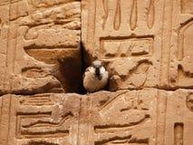 Casa del passero nell'Egitto Fotografia Stock Libera da Diritti