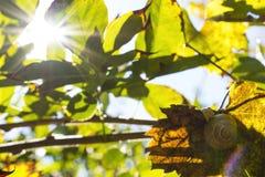 Casa del ` s della lumaca sulla foglia marrone all'autunno immagini stock