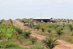 Casa del trabajo del granjero del cultivo de la palma Fotografía de archivo
