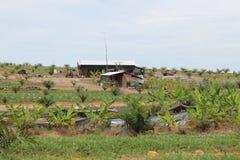 Casa del trabajo del granjero del cultivo de la palma Imagen de archivo libre de regalías