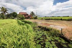Casa del villaggio rurale nella risaia - serie 2 Immagine Stock Libera da Diritti