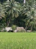 Casa dell'agricoltore nei tropici, India Immagine Stock