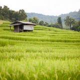 Casa dell'agricoltore nel giacimento del riso Immagini Stock