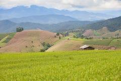 Casa dell'agricoltore nel giacimento del riso Fotografia Stock