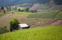 Casa dell'agricoltore nel giacimento del riso sulla montagna Immagini Stock