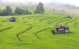 Casa dell'agricoltore nel giacimento a terrazze verde del riso Fotografie Stock