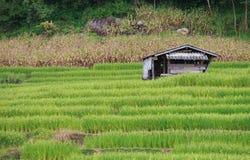 Casa dell'agricoltore nel giacimento a terrazze verde del riso Fotografia Stock