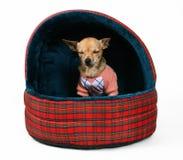 Casa dell'animale domestico Fotografie Stock Libere da Diritti