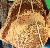 Casa dell'ape Fotografia Stock Libera da Diritti