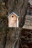 Casa dell'aviario per i piccoli uccelli inchiodati ad un albero massiccio con la corteccia decorata di struttura fotografia stock libera da diritti