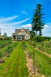 Casa dell'azienda agricola della bacca con gli arbusti di bluebbery nella parte anteriore e nel fondo del cielo blu fotografia stock