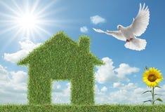 Casa dell'erba verde e della colomba Fotografia Stock Libera da Diritti