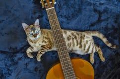 Casa dell'occhio azzurro del gatto di bellezza del Bengala Immagine Stock Libera da Diritti
