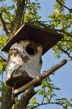Casa dell'uccello Fotografie Stock