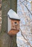 Casa dell'uccello. Allevamento della cabina sull'albero Immagini Stock Libere da Diritti