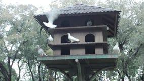 Casa dell'uccello del piccione in un parco archivi video