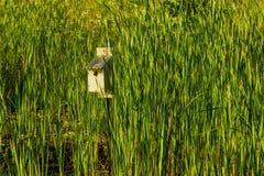 Casa dell'uccello su un palo al parco Immagini Stock Libere da Diritti