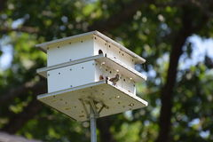 Casa della Camera dell'uccello Immagini Stock