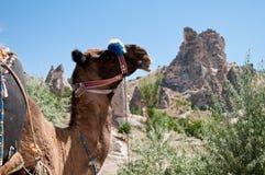 Casa della caverna e del cammello Immagini Stock