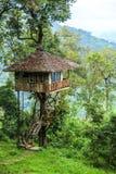 Casa della cima d'albero Immagine Stock