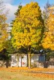 Casa della famiglia ed albero variopinto nella caduta fotografie stock libere da diritti