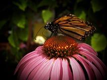 Casa della farfalla Immagini Stock Libere da Diritti