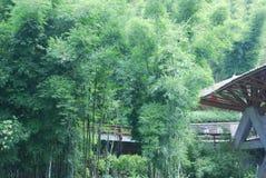 casa della foresta Immagine Stock Libera da Diritti