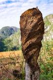 Casa delle termiti Immagine Stock Libera da Diritti
