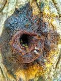 Casa di ape nell'albero Fotografia Stock Libera da Diritti