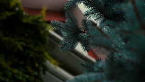 Casa di campagna del mattone rosso con le colonne d'annata ed abete rosso blu nel giardino archivi video