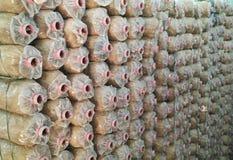 Casa di coltivazione del fungo Immagine Stock