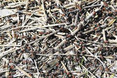 Casa di configurazione delle formiche fotografie stock libere da diritti