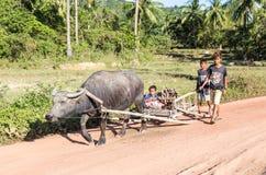 Casa di guida con il bufalo Fotografie Stock Libere da Diritti