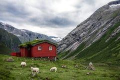 Casa di legno rossa del tetto tipico dell'erba del norvegese nel panorama scandinavo Immagini Stock Libere da Diritti